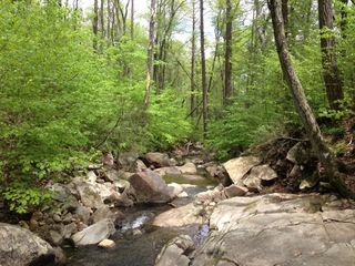 Lyme woods